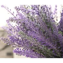 Lavendel Provence